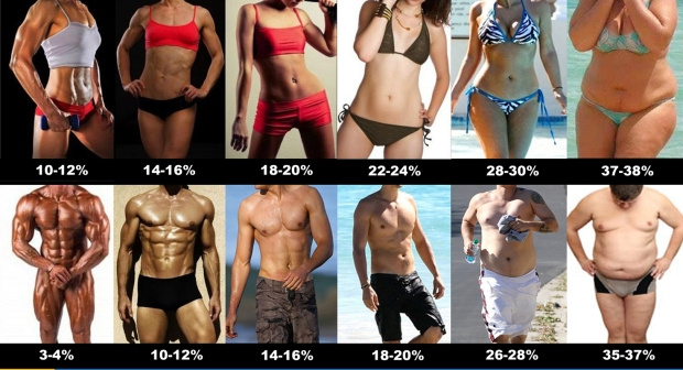 body_fat_percentage.jpg
